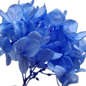 プリザーブドフラワー 花材 あじさい 小分け約4g ブルー|solargift