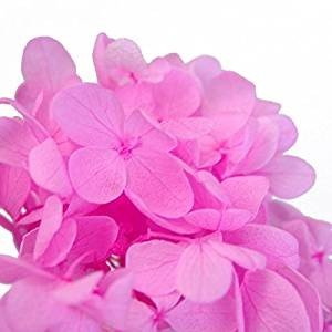 プリザーブドフラワー 花材 あじさい 小分け約4g ピンク|solargift