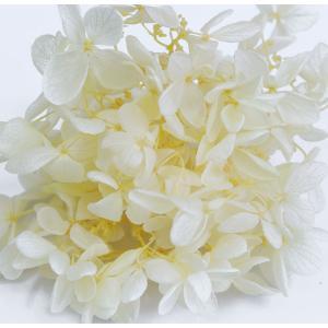 プリザーブドフラワー アジサイ 花材 レモン 小分け約4g|solargift