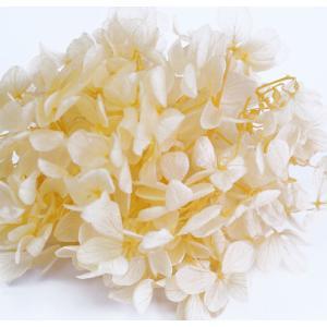 プリザーブドフラワー 花材 アジサイ アプリコット 小分け約4g|solargift