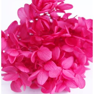 プリザーブドフラワー アジサイ 花材 レッド 小分け約4g|solargift