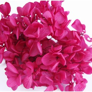 プリザーブドフラワー アジサイ 花材 ダークレッド 小分け約4g|solargift