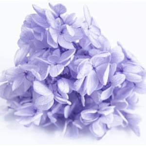 プリザーブドフラワー 花材 アジサイ ラベンダー 小分け約4g|solargift