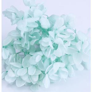 プリザーブドフラワー 花材 アジサイ アイスグリーン 小分け約4g|solargift