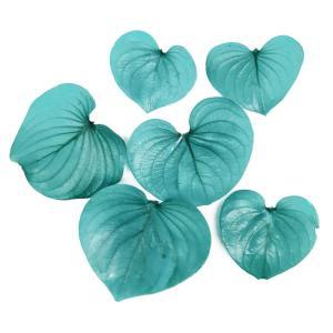 プリザーブドフラワー 花材 ハートリーフ エメラルドグリーン 小分け 6枚 そらプリの画像