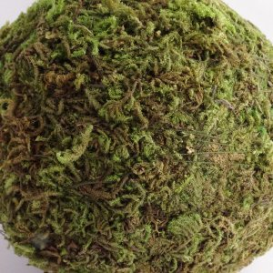 モスボール グリーン 10cm 1個 プリザーブドフラワー 材料|solargift