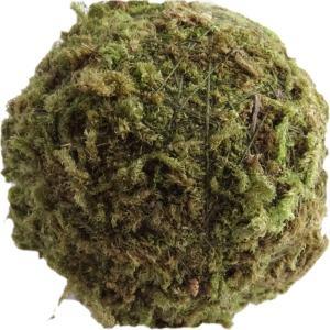 モスボール グリーン 5cm 2個 プリザーブドフラワー 材料|solargift