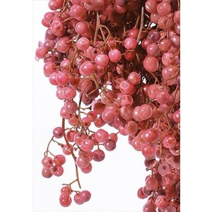 プリザーブド 花材 プリザーブド ピンク 小分け約10g そらプリ|solargift