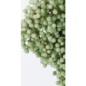 プリザーブドフラワー 花材 ペッパーベリー クリアグリーン 小分け約10g そらプリ|solargift