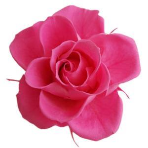 開花バラ Sサイズ ピンク 小分け 1輪 プリザーブドフラワー 材料 バラ 花材 大地農園|solargift