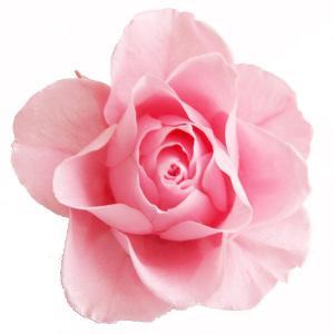 プリザーブドフラワー 材料 花材 開花バラ Sサイズ ライトピンク 小分け 1輪|solargift
