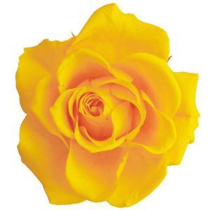 プリザーブドフラワー 材料 開花バラ Sサイズ サフラン 小分け 1輪 プリザーブドフラワー バラ 花材 大地農園|solargift
