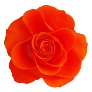 プリザーブドフラワー 材料 開花バラ Sサイズ オレンジ 小分け 1輪 プリザーブドフラワー バラ 花材 大地農園|solargift
