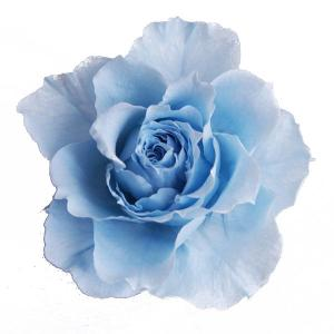開花バラ Sサイズ プリザーブドフラワー 材料 ライトブルー 小分け 1輪 プリザーブドフラワー バラ 花材 大地農園|solargift