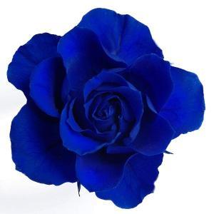 プリザーブドフラワー 材料 開花バラ Sサイズ ブルー 小分け 1輪 プリザーブドフラワー バラ 花材 大地農園|solargift
