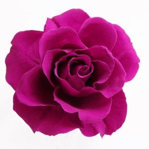 そらプリ プリザーブドフラワー 開花バラ Sサイズ カシス 小分け 1輪 花材|solargift