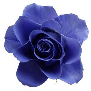 プリザーブドフラワー 材料 花材 開花バラ Sサイズ フジイロ 小分け 1輪 プリザーブドフラワー|solargift