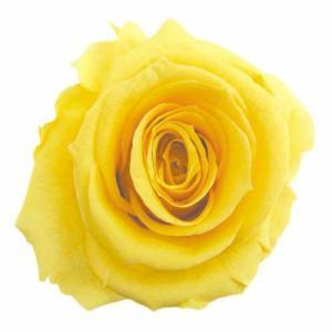 スタンダードローズ バイオレット 小分け 1輪入 プリザーブドフラワー 材料 花材|solargift