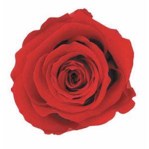 スタンダードローズ チェリーレッド 小分け 1輪入 プリザーブドフラワー 花材 材料|solargift
