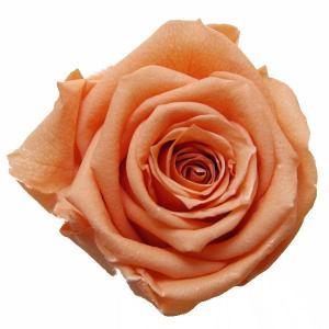 スタンダードローズ サンセットオレンジ 小分け 1輪入 プリザーブドフラワー 材料 花材|solargift