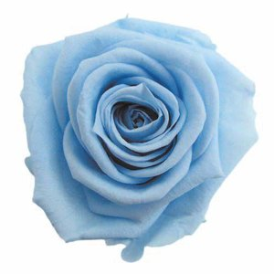 スタンダードローズ パウダーブルー 小分け 1輪入 プリザーブドフラワー 材料 花材|solargift