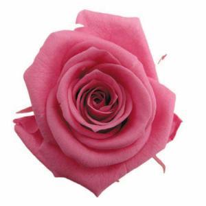 スタンダードローズ ニューヨークピンク 小分け 1輪入 プリザーブドフラワー 花材 材料|solargift
