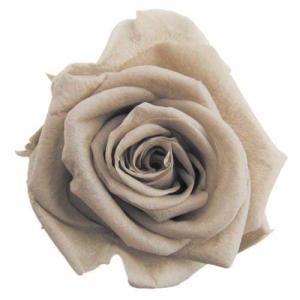 スタンダードローズ ヘイゼルナッツ 小分け 1輪入 プリザーブドフラワー 材料 花材|solargift