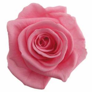 スタンダードローズ シュガーピンク 小分け 1輪入 プリザーブドフラワー 材料 花材|solargift