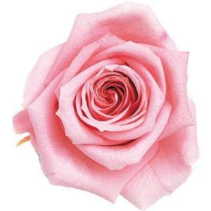 ピッコラブロッサムローズ ベイビーピンク 小分け 1輪入 プリザーブドフラワー 花材 材料|solargift