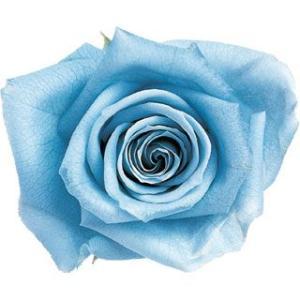 ピッコラブロッサムローズ パウダーブルー 小分け 1輪入 プリザーブドフラワー 花材 材料|solargift