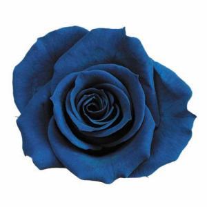 プリザーブドフラワー 花材 ピッコラブロッサムローズ マジョリカブルー 小分け 1輪|solargift