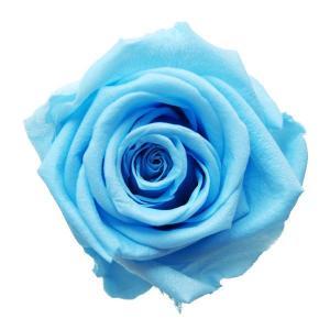 ベイビーローズ パウダーブルー 小分け 1輪入 プリザーブドフラワー 材料 花材|solargift