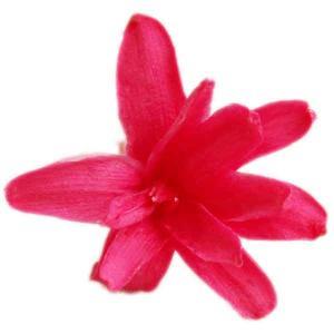 チューベローズ ホットピンク 小分け 2輪入 プリザーブドフラワー 材料 花材 フロールエバー|solargift