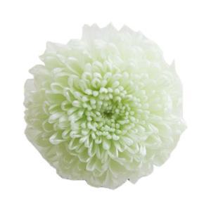 プリザーブドフラワー 花材 ピンポンマム ミントグリーン 1輪 小分け フロールエバー|solargift