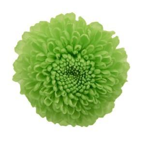 プリザーブドフラワー 菊 ピンポンマム アップルグリーン 1輪 小分け フロールエバー|solargift