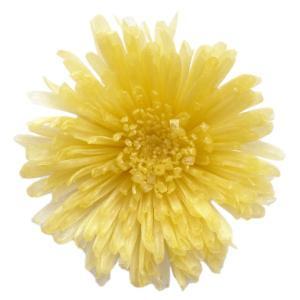 プリザーブドフラワー 材料 スプレーマム イエロー 小分け 1輪入 プリザーブドフラワー 花材 菊|solargift
