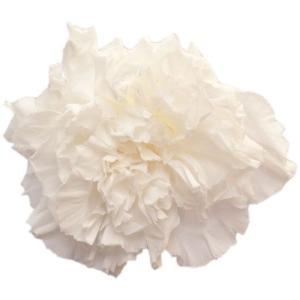 スタンダードカーネーション パールホワイト 小分け 1輪入 プリザーブドフラワー 材料 花材|solargift