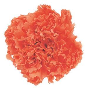 スタンダードカーネーション サンセットオレンジ 小分け 1輪入 プリザーブドフラワー 材料 花材|solargift