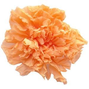 スタンダードカーネーション シャーベットオレンジ 小分け 1輪入 プリザーブドフラワー 材料 花材|solargift