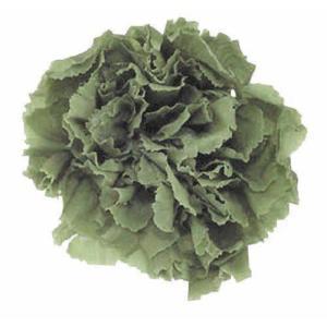スタンダードカーネーション グリーンティー 小分け 1輪入 プリザーブドフラワー 材料 花材|solargift