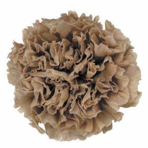 スタンダードカーネーション ヘーゼルナッツ 小分け 1輪入 プリザーブドフラワー 材料 花材|solargift