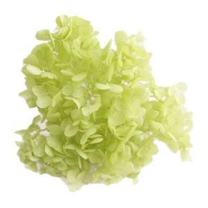 プリザーブドフラワー 花材 材料 ソフトアジサイアナベル アップルグリーン 小分け|solargift