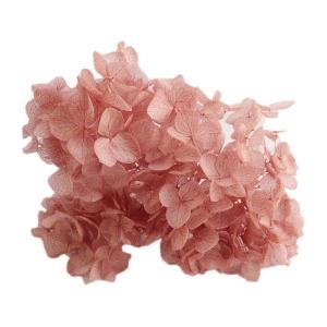 プリザーブドフラワー 材料 花材 ソフトアジサイアナベル クランベリー 小分け|solargift