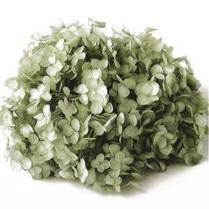 プリザーブドフラワー 花材 材料 ソフトアジサイアナベル グリーンティー 小分け|solargift