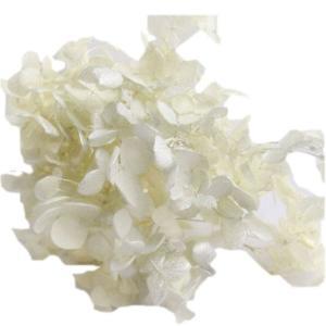 プリザーブドフラワー 材料 花材 ソフトアジサイアナベルスプラッシュ カスタード 小分け|solargift
