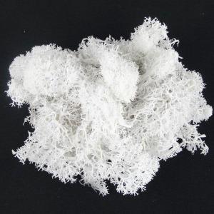 フィンランドモス ホワイト 小分け プリザーブドフラワー 材料|solargift