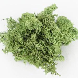 フィンランドモス グリーン 小分け プリザーブドフラワー 材料 花材|solargift