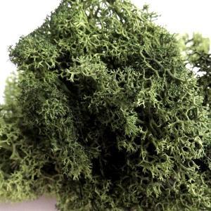 フィンランドモス モスグリーン 小分け プリザーブドフラワー 材料|solargift