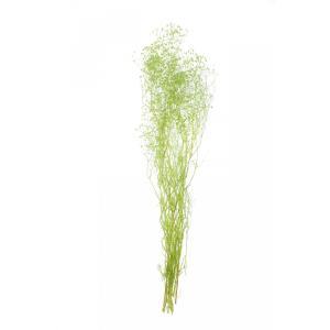 かすみ草 プリザーブドフラワー 花材 フレッシュグリーン 小分け そらプリ solargift