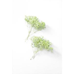 カスミソウ オーバータイム フレッシュグリーン 小分け プリザーブドフラワー 材料 花材 かすみ草 大地農園|solargift